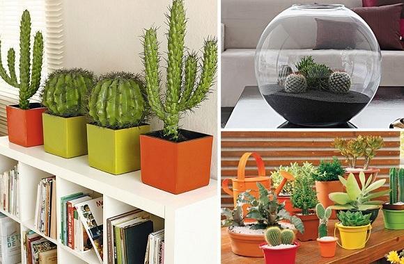 Ideas Con Cactus Para Decorar