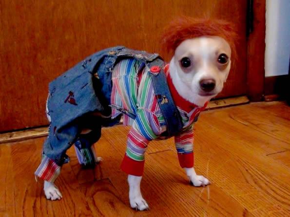fantasia cachorro boneco assassinio