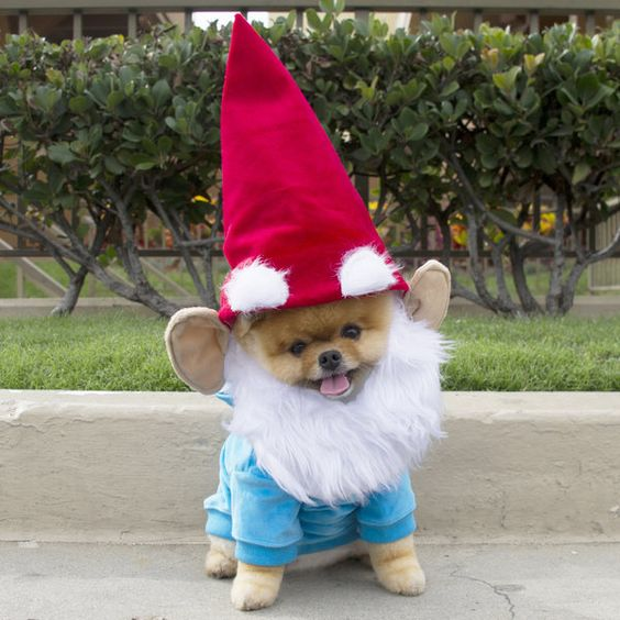 fantasia cachorro gnomo
