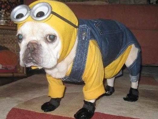 fantasia cachorro minion