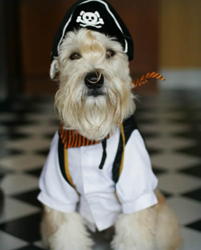 fantasia cachorro pirata