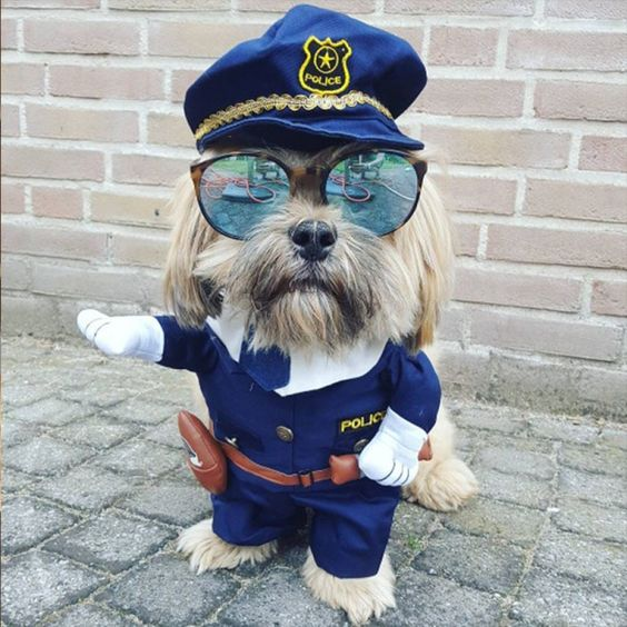 fantasia cachorro policial