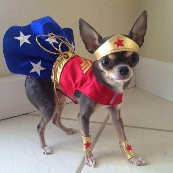 fantasia cachorro super heroi