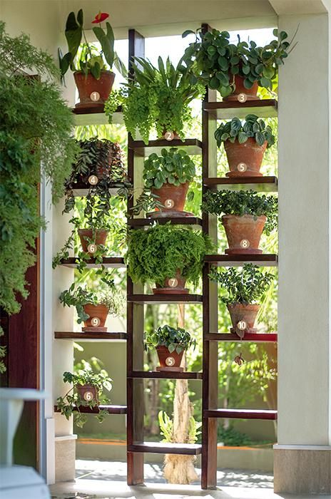 jardim vertical ideias:Pinterest Indoor Garden Wall