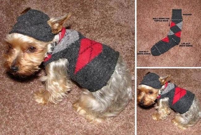 reutilizar meias sem par roupa cachorro