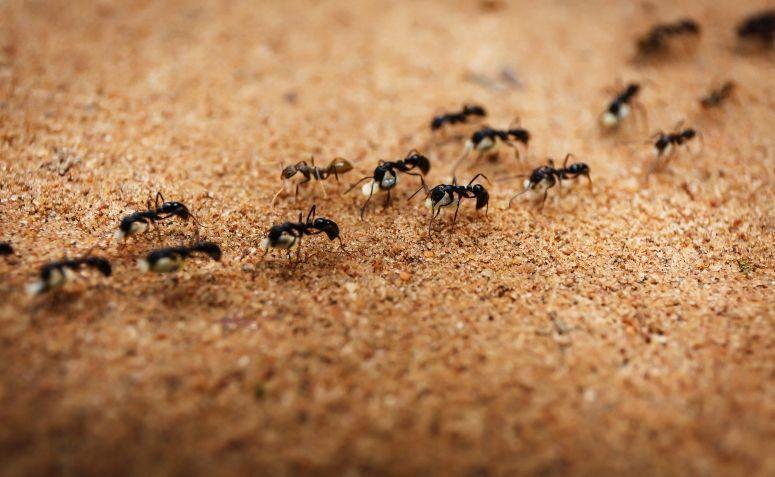 utilidades borras cafe formigas